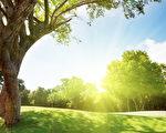 每天都有超过一兆片叶子被剥夺了养分来源。这件事似乎无人闻问,但是我们应该在乎,基于同一个我们必然会在乎的理由:因为一个生命白白死去。(Fotolia )