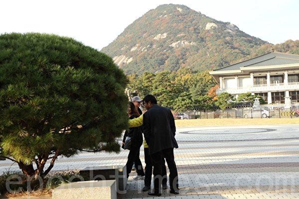 在韩国总统府内的一处法轮功真相点旁边,一群中国游客正在观看一棵松树上开放的优昙婆罗花。(摄影:全宇/大纪元)