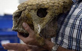 组图:科学家:史前巨兽数百万年前与人类共存