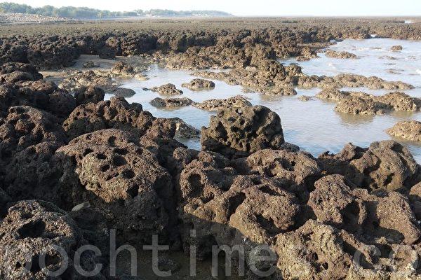 觀新藻礁自然景觀保育,成為地方焦點(徐乃義/大紀元)