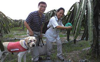 「高雄一日農夫體驗趣」導盲犬摻一腳