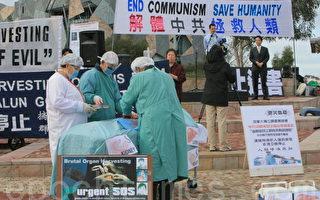 澳洲大批病人去中国换器官 透露活摘真相