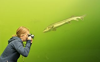 数千作品参赛 世界级自然摄影比赛作品欣赏