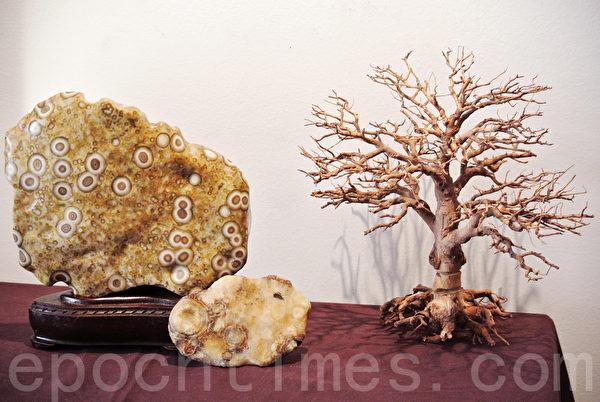 前方小颗台湾文石,2个月前从三峡地区的玄武岩中发现。(周美晴/大纪元)