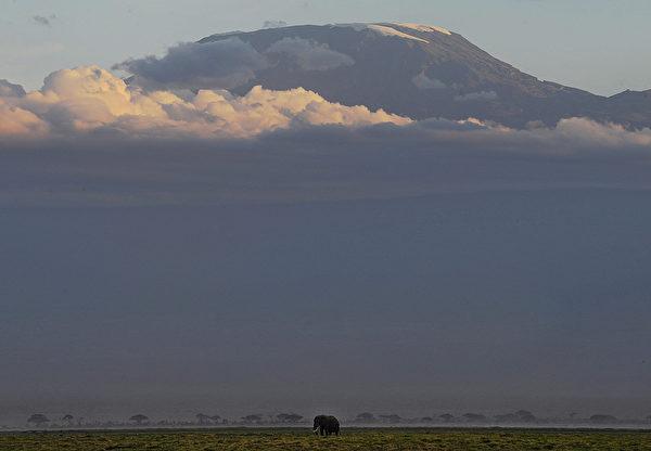 2013年10月7日,肯尼亞安博塞利國家公園的大象在草原上吃草。(TONY KARUMBA/AFP)