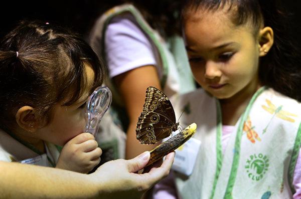 2013年10月10日,美国自然历史博物馆的温室蝴蝶展预展。图为女学生观赏蝴蝶标本。(EMMANUEL DUNAND/AFP)