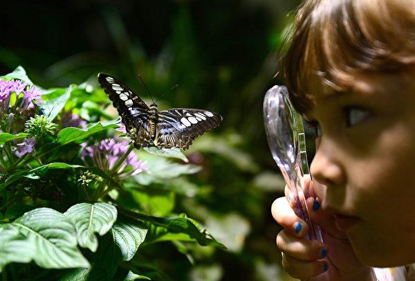 2013年10月10日,美国自然历史博物馆的温室蝴蝶展预展。图为一位女学生观赏蝴蝶。(EMMANUEL DUNAND/AFP)