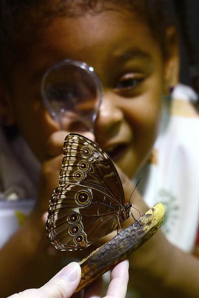 2013年10月10日,美国自然历史博物馆的温室蝴蝶展预展。图为一位女学生观赏蝴蝶标本。(EMMANUEL DUNAND/AFP)