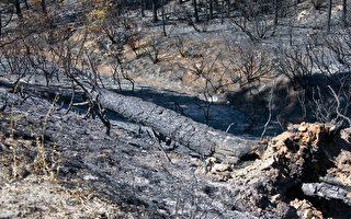 加州优胜美地国家公园的山火所过之处,留下一片焦土。(曹景哲/大纪元)