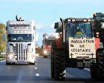 为了反抗法国政府的环保税,西部布列塔尼地区民众反应激烈。图为11月9日,当地农民开着货车、大型拖拉机上高速公路进行抗议。(JEAN-FRANCOIS MONIER/AFP/Getty Images)