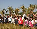 """参与下田体验收割的来宾一起欢庆丰收,为即将开幕的""""2013工艺稻草文化节""""宣传造势。(林萌骞/大纪元)"""