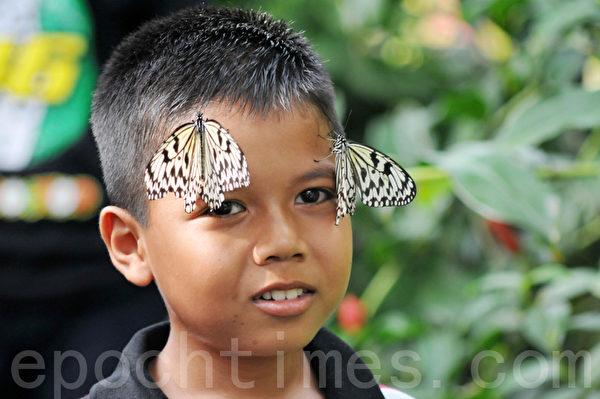 馬來西亞檳城蝴蝶園蝴蝶落在臉上(明國/大紀元)