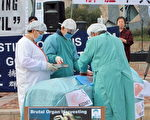 墨尔本一位肾脏外科医生在接受费尔法克斯媒体采访中提到,他的病人成团大批去中国接受器官移植,间接印证了中国有一个庞大的器官供应库的存在,而且其数量远远超过了中国的死刑犯人数。图为模拟演示中共活摘器官实景。 (陈明 / 大纪元)