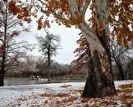2013年12月6日,美國遭遇多年來最強風暴,導致7人死亡。圖為德州白石湖附近冰雪。(Ronald Martinez/Getty Images)