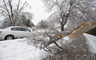 加拿大遇10年最大冰雨 多伦多25万用户断电