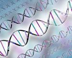 生物的基因細絲 促使起死回生的感應
