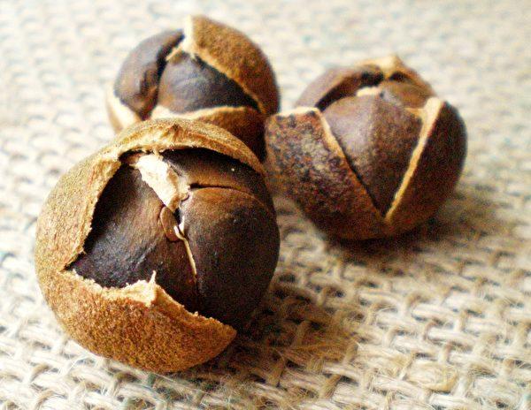 晒干未脱壳的苦茶籽。(图:德记油坊提供)