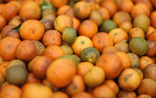 中国黄龙病入侵 逾13万亩美国佛州柳橙园废弃
