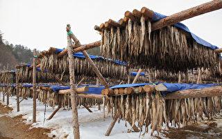 韩国大关岭海拔832m,这里有15个大型黄太鱼干渔场,黄太鱼产量占全国70%,是韩国最大的黄太鱼干场,而且黄太鱼以味道美、营养高著称。(全宇/大纪元)