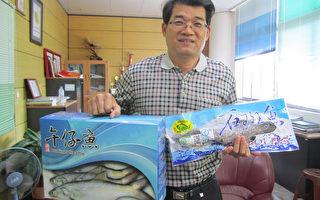 屏東鮮讚  漁會推石斑魚禮盒