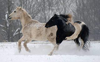 在12生肖中,雄姿矫健、长鬃飞扬的马象征着自由勇敢、飞腾活跃。(MARIJAN MURAT/AFP/Getty Images)
