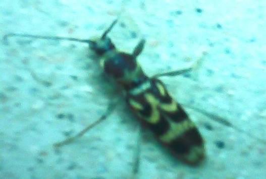 """昆虫背上惊现""""灭人""""二字。(图片由作者提供)"""