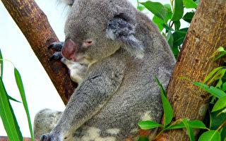 澳洲留學去 袋鼠相伴(3)