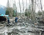 3月22日(週六)上午西雅圖以北的郊區發生山體滑坡,滑坡夷平了大約一平方英里面積, 殃及周圍人口約180人的奧索(Oso)社區,以及人口約1350人的達靈頓社區。40多個建築物被摧毀。死亡人數累計至14人,失蹤人數升至176。 (Washington State Patrol via Getty Images)