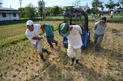手工割稻。(俩佰甲提供)
