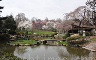 """费城西郊菲尔蒙特公园(Fairmount Park)里著名的日本花园""""Shofuso(松风庄)""""(司瑞/大纪元)"""