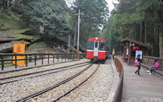 阿里山小火车带着游客展开赏樱之旅。(赖瑞/大纪元)