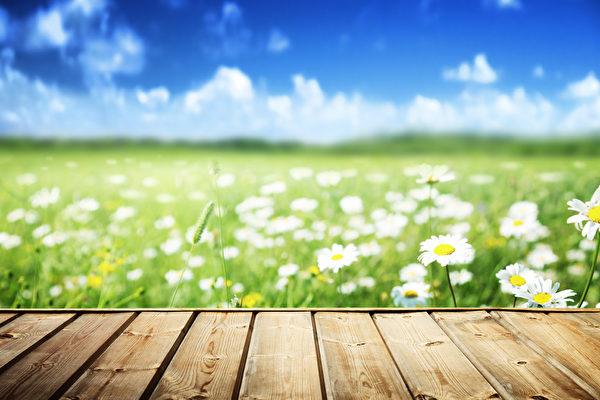 土地上长满了雏菊花。(Fotolia)