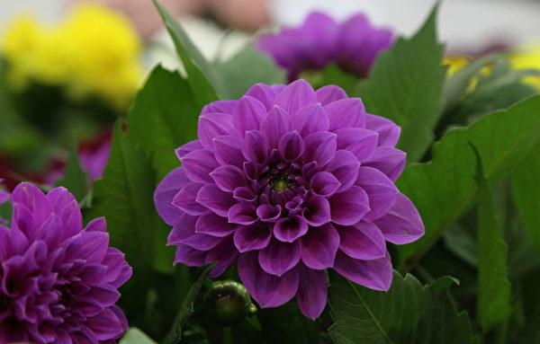 今年高阳市国际花卉博览会的1万种共1亿株花卉令人目不暇接。(全宇/大纪元)