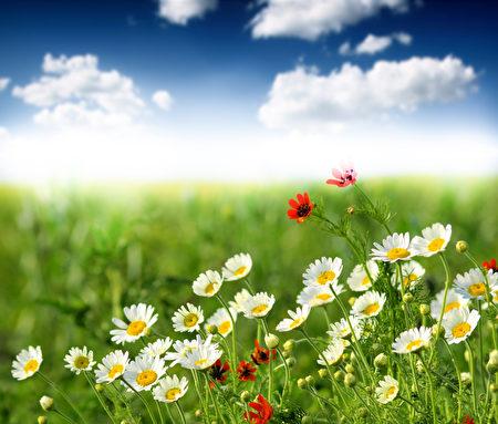 """时序进入了夏季,习惯上,人们将立夏作为夏季的开始。中医认为,夏季心阳旺盛,随着夏日气温升高后,人易烦躁不安,机体免疫功能也较为低下,因此,要顺应节气的这种变化,保养心脏,做好""""精神养生"""";而夏季饮食则强调五苦,因为夏天多吃""""苦""""味的食物有利于五脏六腑的五行运做。 (Fotolia)"""