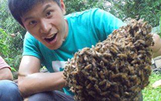 姚淳耀遭3万多只蜜蜂袭击 吓坏了