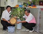 草屯镇长洪国浩(左)、清洁队长林炳在(右)一起清理花盆下容易积水的水盘。(林萌骞/大纪元)