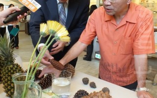 """科博馆长孙孙维新(左)介绍中心教案指出,大自然的""""神奇密码""""可应用到建筑、艺术、自然等领域,甚至凤梨、松果、向日葵等植物的生长排列中,都蕴藏着黄金比例。(黄玉燕/大纪元)"""