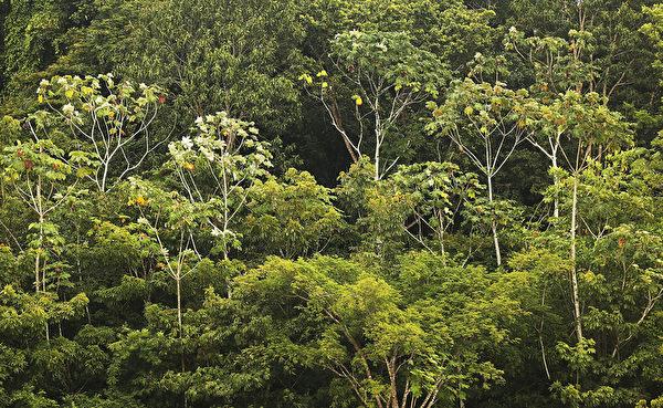 巴西马瑙斯的亚马逊热带雨林(Mario Tama/Getty Images)