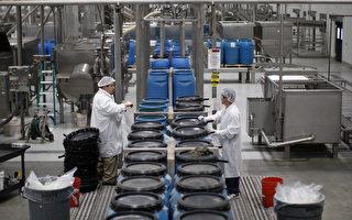 美国制造业在经济衰退期过后迄今仅雇用64.6万人。专家认为,工厂自动化与缺乏训练计划是关键所在。图为加州伊芳食品工厂。(David McNew/Getty Images)