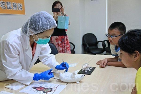 指导老师指导学员以老鼠玩具手做解剖老鼠内脏结构。(许享富 /大纪元)