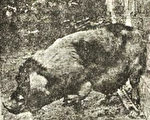 """1923年在上海发生一起""""人畜轮回转世""""事件。一只猪竟然长着人手。(网络图片)"""