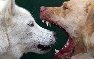 非人類獨有情感 研究:狗也會嫉妒!