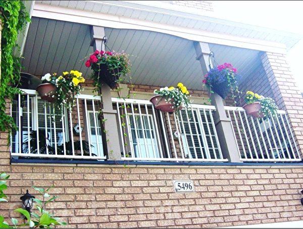 这户人家门前空地不大,却在立体空间养花,爬墙虎、楼上的吊篮、护栏上的花相映成趣。(李文笛 /大纪元)