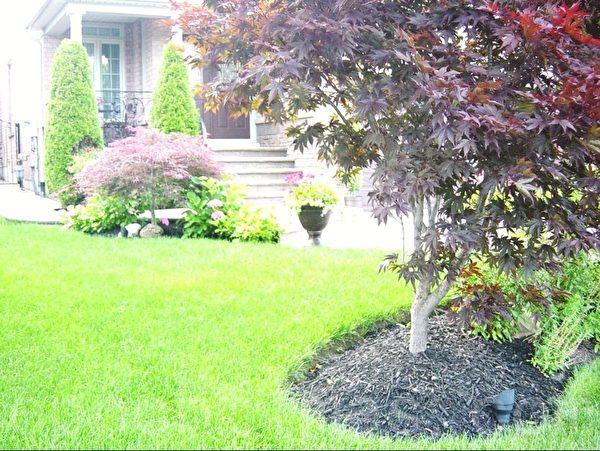 这家草地不小,但收拾的整整齐齐,树旁边用碎木屑铺地,避免长杂草,草地和木屑分离的清清楚楚。(李文笛 /大纪元)