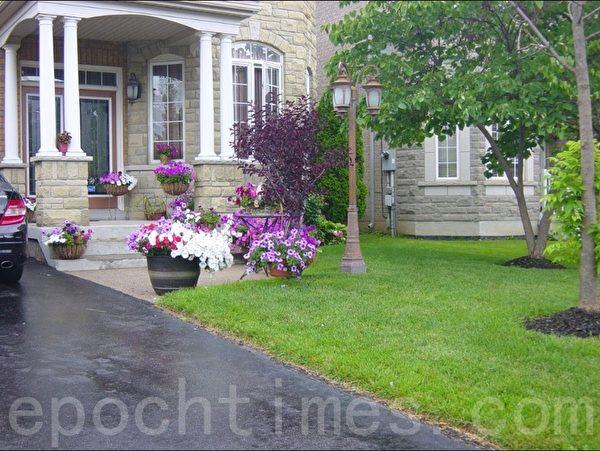 草坪上主要种了几棵树,门前由盆花打扮,也很漂亮。(李文笛 /大纪元)