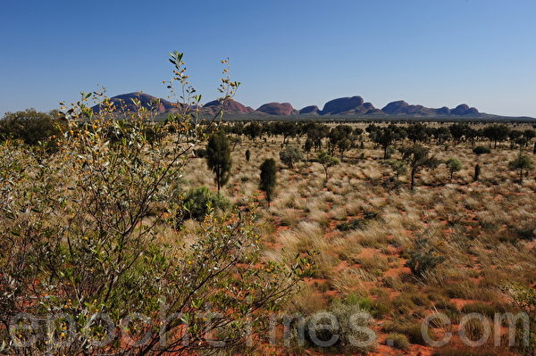 茂盛的荒草围着卡塔尤塔石群(简玬/大纪元)