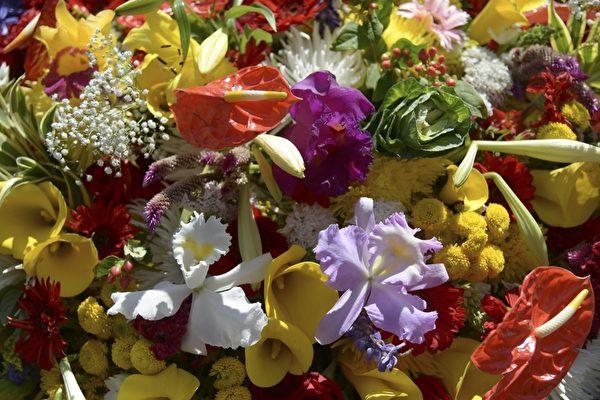 2014年8月10日,哥伦比亚鲜花节插花游行。(Raul ARBOLEDA/AFP)