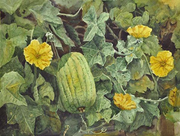 范植正,《絲瓜》,56x76cm,(中華亞太水彩藝術協會提供)