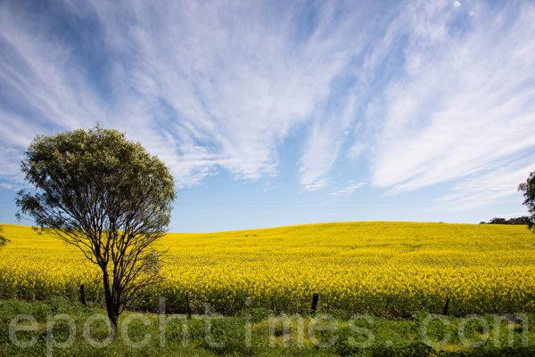 西澳珀斯遠郊的初春,放射性雲彩奇景。(林文責/大紀元)