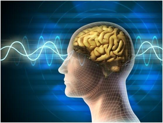 """人会随着年龄增长记忆越差。可藉由多学习与接触新的知识与事物有助大脑内""""海马回""""(hippocampus)和""""嗅球""""( olfactory bulb)产生新的神经元,帮助大脑恢复年轻。(fotolia)"""
